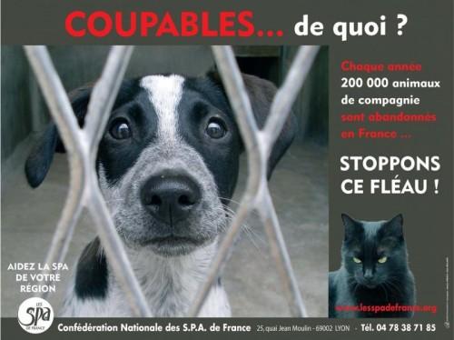 Blog de luciolemystique : Le bric à brac de Zébuline, Moi, chien de personne