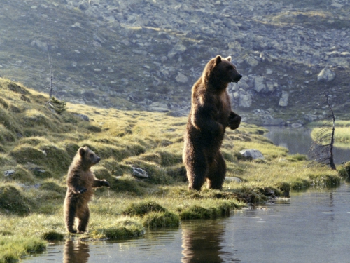 photo l'ours.jpg